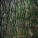 Przepiękny oraz {czysty zieleniec to nie lada wyzwanie, szczególnie jak jego konserwacją zajmujemy się sami.
